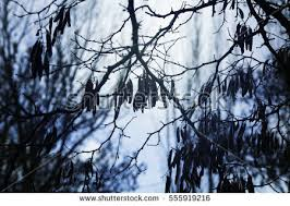 sad tree stock images royalty free images vectors