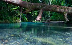 explore beauty nature and cultural history in daintree the