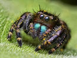 spider wallpaper