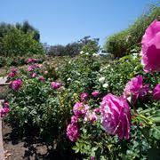 immagini di giardini fioriti stili di giardini fioriti