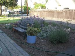 earthworks for water wise and water thrifty trees and shrubs