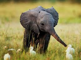 Mob Baby Meme - baby elephant blank template imgflip