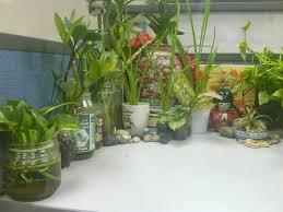 delightful best indoor plants for office indoor plants office