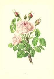 1962 vintage floral print pink rose print flower home decor