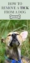 64 best pet safety images on pinterest your pet doggy stuff and