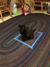 definitely try this at home the cat in the square trick