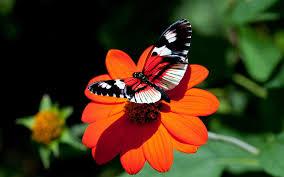 flower butterfly 6917771
