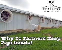 Pig Kitchen Curtains by Why Do Farmers Keep Pigs Inside My Fearless Kitchen