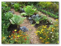 Companion Gardening Layout Planting Of Vegetables