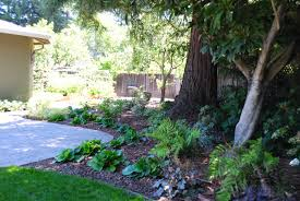 tree ideas for backyard landscaping in shade shade garden under redwood trees julie orr