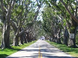 100 Best Small Towns To Visit Martin County Florida Travel by Banyon Tree Lined Bridge Road In Hobe Sound Martin County