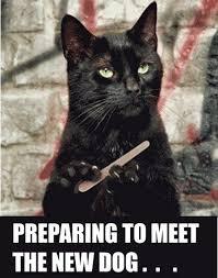 Cat And Dog Memes - 31 preparing to meet the new dog cat meme pmslweb