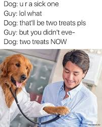 Doctor Memes - dog doctor meme free a million pictures funniest memes