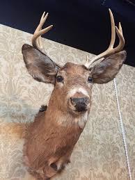 the moose head over the mantel seed u0026spark