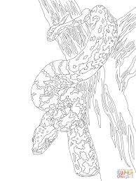 african rock python coloring page free printable coloring pages
