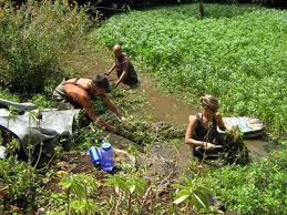 planting native species waimea valley