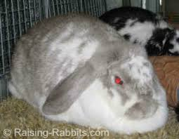 info on rabbits q u0026a answers to curious questions about rabbits