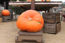 best photographic pumpkin patches in orange county cbs los angeles