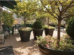 small flowering trees for pots instavite me