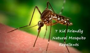 natural mosquito repellents natural mosquito repellents 7 kid friendly options