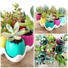 Succulent Planter Diy by Easter Egg Succulent Planters Happiness Is Homemade