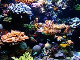 Coral Reef Home Decor Biomesfirst10 Coral Reef Home