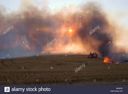 Wildfire Weed by Burned Stock Photos U0026 Burned Stock Images Alamy