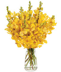 Monthly Flower Delivery Monthly Orchid Delivery Year Of Orchids Calyx Flowers
