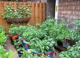 small and simple backyard vegetable garden house design with