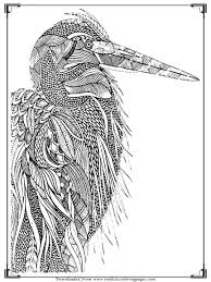 printable birds coloring pages adults realistic coloring pages