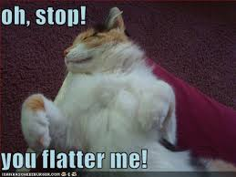 Oh You Stop It Meme - oh stop you flatter me cheezburger funny memes funny pictures