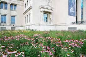 native plant garden design field museum of natural history landscape masterplan chicago
