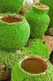 best 25 moss paint ideas on moss garden moss plant