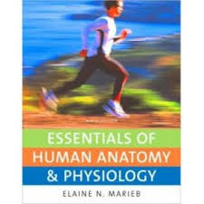 Hole Anatomy And Physiology 13th Edition Test Bank For Essentials Of Human Anatomy And Physiology