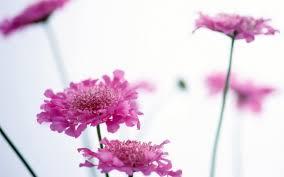 வால்பேப்பர்கள் ( flowers wallpapers ) 01 - Page 4 Images?q=tbn:ANd9GcRPW3IbwI7or_RGIKg8LwogunYl47mWpdGucS2IhDyVEoAFfRDMmQ