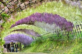 Flowers In Japanese Culture - a trip to a fantastical world full of wisteria flowers japan