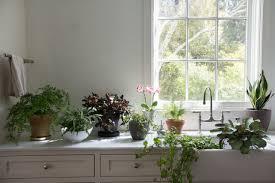 Low Light Outdoor Plants Best Houseplants 9 Indoor Plants For Low Light Gardenista