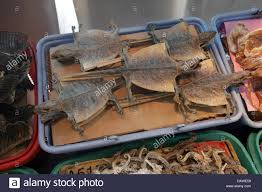 bats for sale dried bats used in the traditional medicine tcm are for