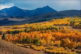 aspen trees fall conway summit mono county eastern