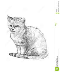 sand cat drawing sketch stock illustration image of companion