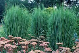 all about ornamental grass