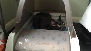product review petsafe scoopfree self cleaning litter box