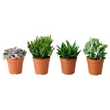 small potted plants succulent lončanica ikea my ikea pinterest plants deco