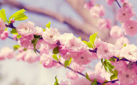 Flower Wallpaper Flower Wallpaper Hd Tag Download Hd Wallpaperhd Wallpapers