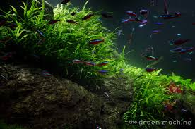 Marine Aquascaping Techniques Huge Aquascape Tutorial Step By Step Spontaneity By James Findley