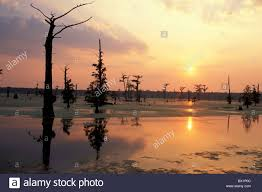 Louisiana scenery images Alligator bayou louisiana marsh mood near baton rouge scenery jpg