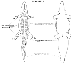 alligator hunting regulations overview louisiana department of