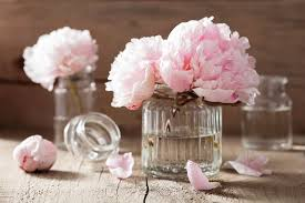pianese flowers peony flower meaning flower meaning