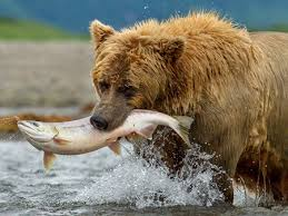 bears disneynature