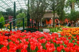gardens by the bay u0027s 2017 tulip festival channels van gogh the